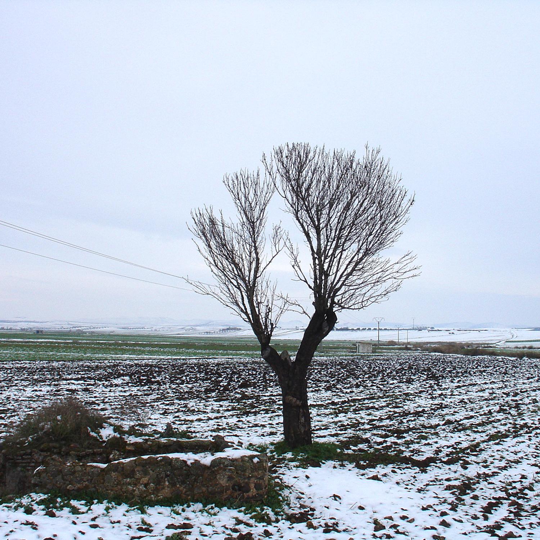 Paisaje manchego nevado